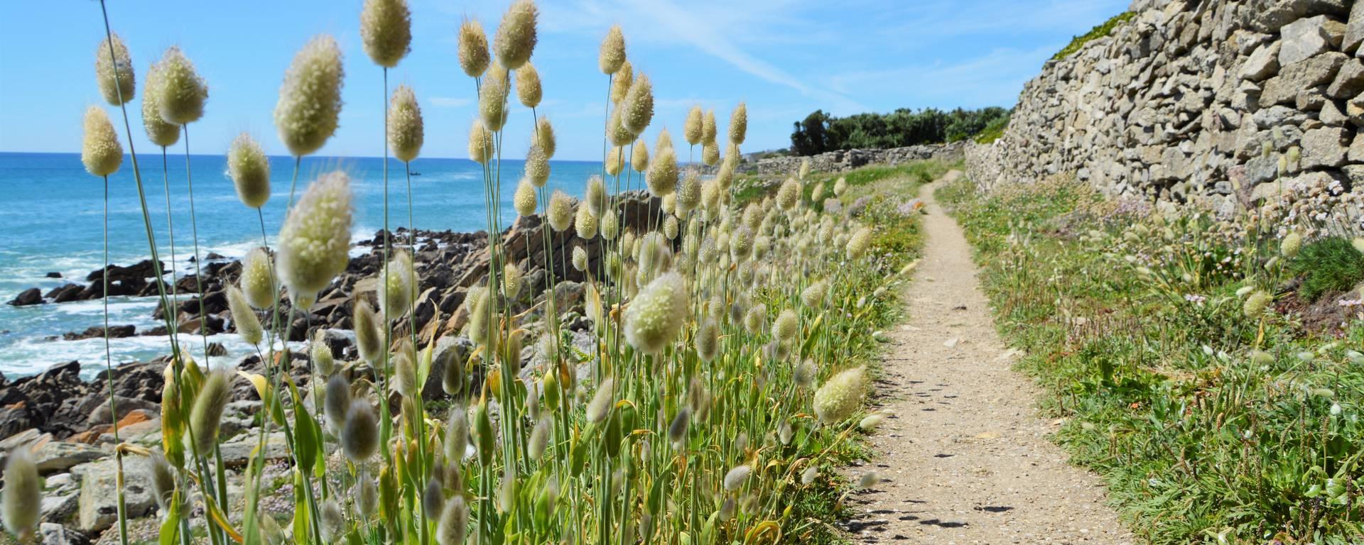 Sentier littoral Plozévet - ©M.Hamel