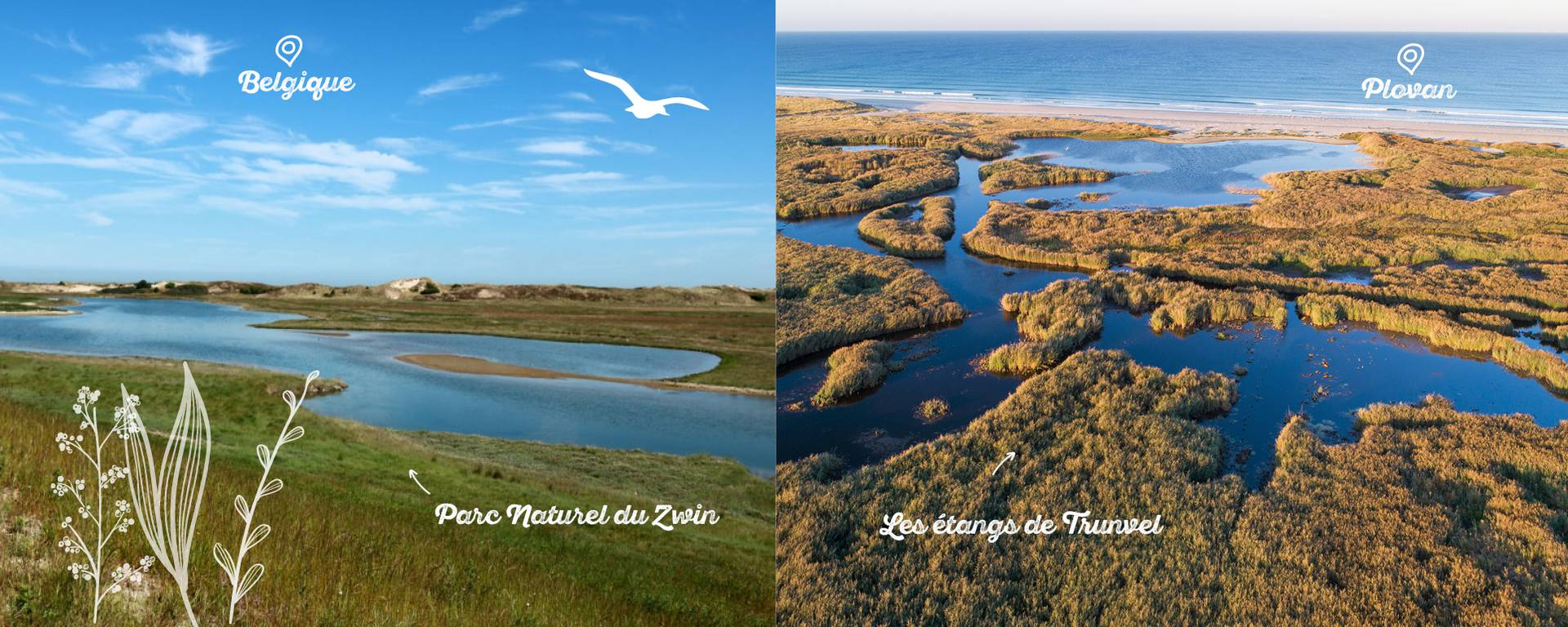 Entre le parc naturel du Zwin en Belgique et les étangs de Trunvel, la ressemblance est troublante, surtout vu du ciel. © GWENn A DRONE