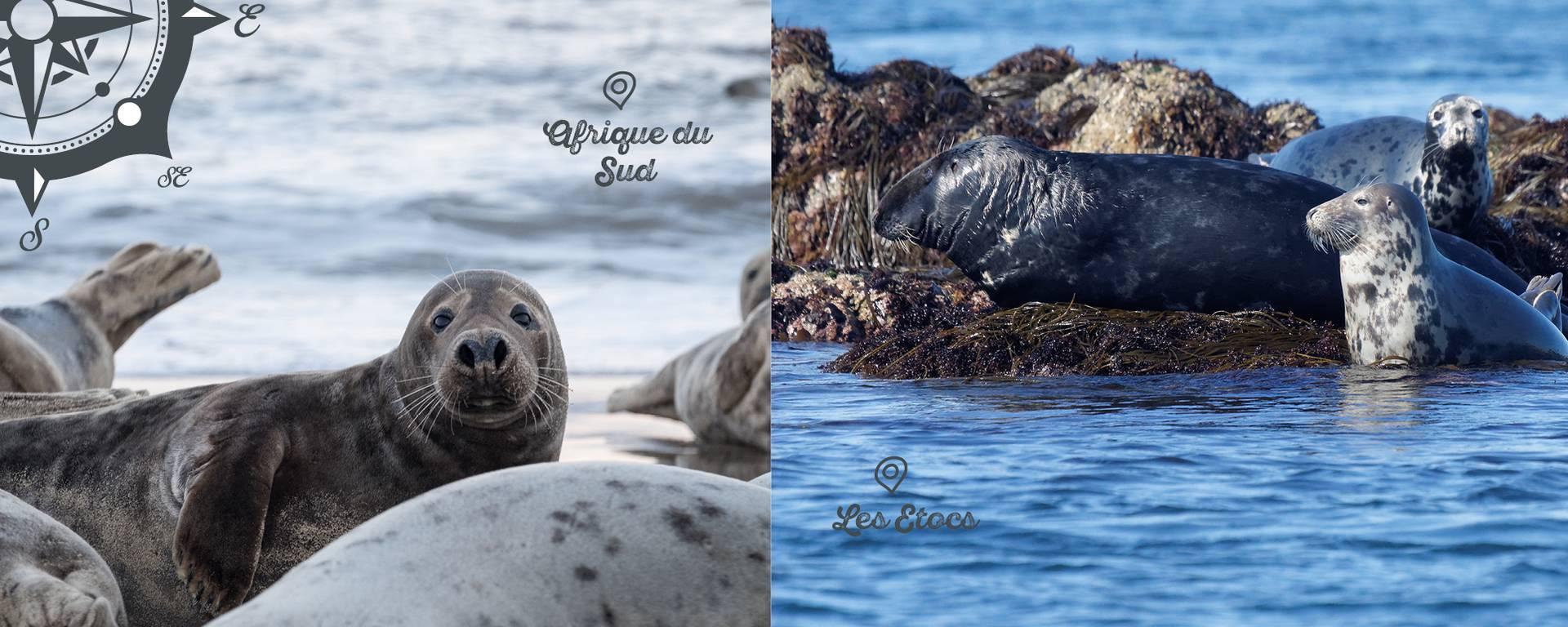 Les Etocs abritent plusieurs colonies de phoques.  © Freepiks / © P. BORDES