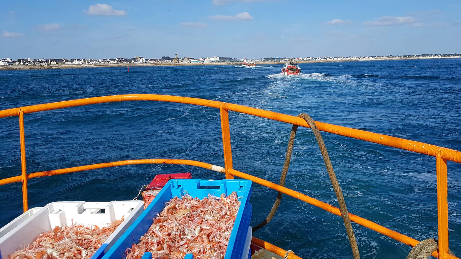 Aller pêcher la langoustine ! ©Miguel Pimentel