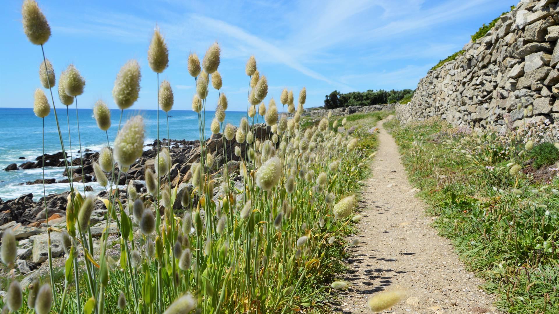 Sentier côtier Plozévet - ©M.Hamel