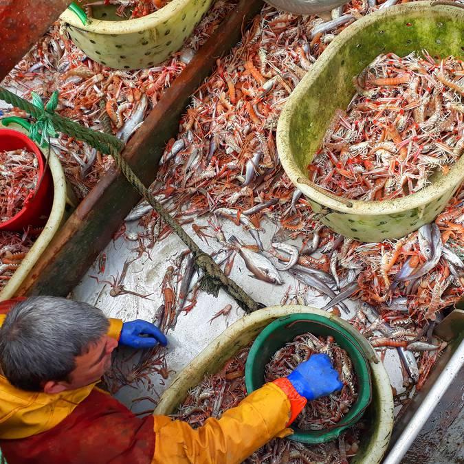 Kaisergranat sortieren... auf einem Fischtrawler im Pays Bigouden © M Pimentel