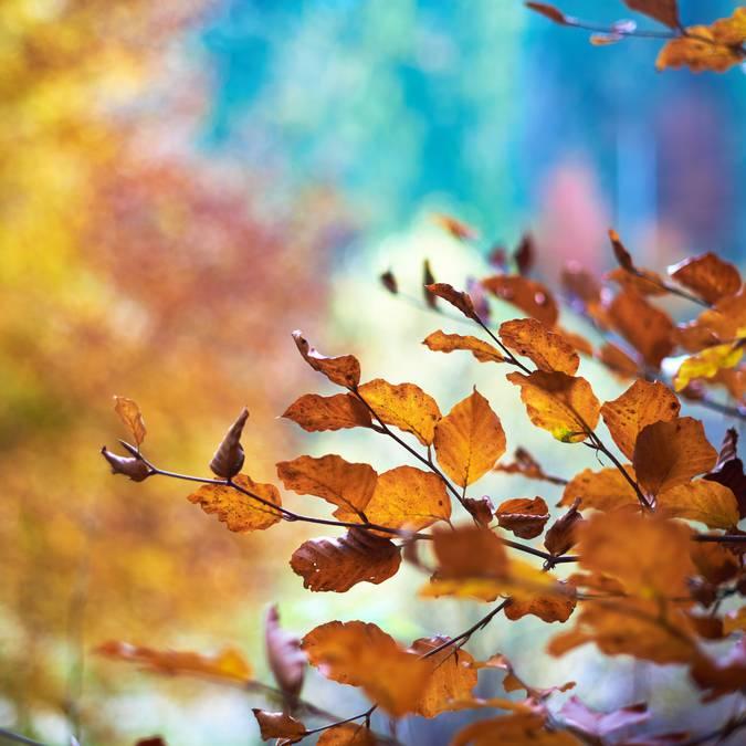 Idées pour l'automne en Pays Bigouden